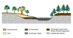 Asymmetrisches Tal im Mittelgebirge