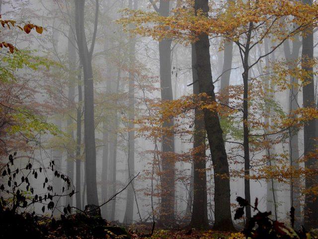 Der Wald im Taunus