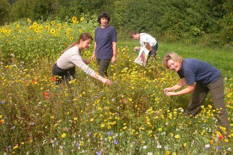 Das Feldflora-Reservat in Schlangenbad-Hausen