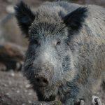 Begegnungen im Taunus: Wanderer und Wildtiere