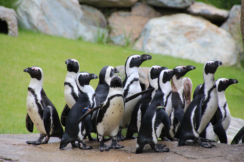 opel-zoo | taunuswelten