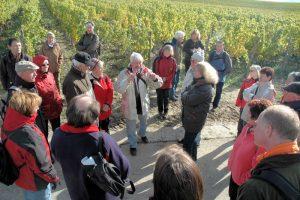 Führung zu Wein und Boden
