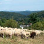 Biosphärenregion Taunus-Rhein-Main: Entscheidung am 11. Dezember?