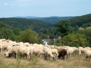 Blick über Niedernhausen-Engenhahn zum Taunuskamm