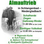 Almauftrieb in Niedergladbach 2018