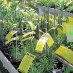 Pflanzenmarkt im Hessenpark eröffnet die Gartensaison im Taunus
