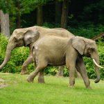 Öffentliche Führungen im Opel-Zoo im Mai – Forschung und Artenschutz im Fokus
