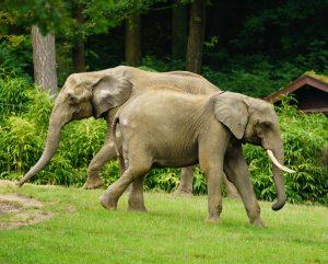 Elefanten im Opel-Zoo