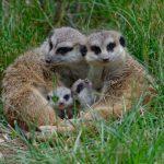 Öffentliche Führungen im Juli im Opel-Zoo