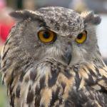 Achtung Federohren – Uhu Woche im Naturpark Taunus vom 10. bis 17. August