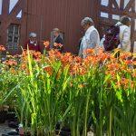 25. Pflanzenmarkt im Freilichtmuseum Hessenpark
