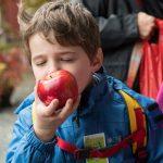 Apfelfest im Freilichtmuseum Hessenpark