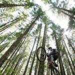 Hessen Forst und Stadt Hofheim bauen illegale Mountainbike-Rampen im Wald ab