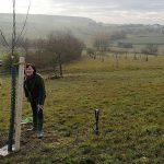 Rheingau-Taunus-Kreis: Dezernentin Dr. Orth-Krollmann pflanzt Birnbaum zum Jubiläum