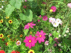 Blühendes für Insekten