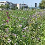 """Hochtaunuskreis: """"Unser Kreis soll blühen"""" – Sieger des Blühfächen-Fotowettbewerbs prämiert"""