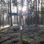 Naturpark Taunus: Auch im Wald nur zu zweit unterwegs