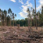 Folgen von Trockenheit und Schädlingsbefall sind an vielen Stellen in den Taunuswäldern zu sehen